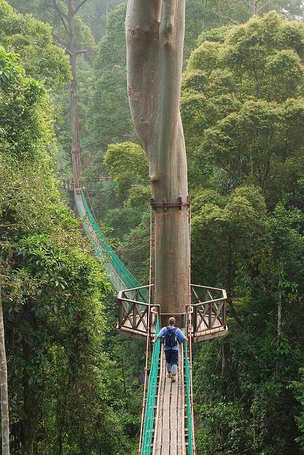 Borneo, Ινδονησία