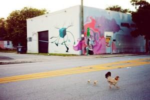 chicken crosses street