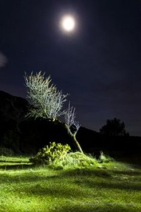 moon tree green night