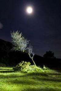 moon tree green night