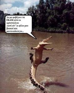krokodeilos5