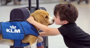 klm-beagle-dog-lost-found-video-600x337