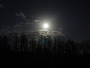 the-forest-on-full-moon_0709711