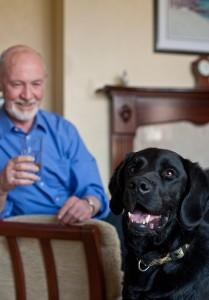 Dementia-Dog-image1