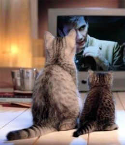 cats-watching-tv
